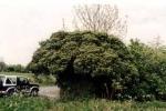 végétation 3008.jpg